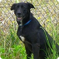 Adopt A Pet :: Zoey - Tipp City, OH