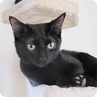 Adopt A Pet :: Layla - Burlington, NC
