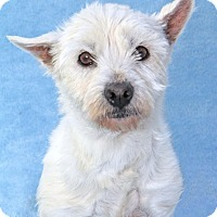 Adopt A Pet :: Fairlane - Encinitas, CA