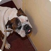 Adopt A Pet :: Bentley - Newnan City, GA
