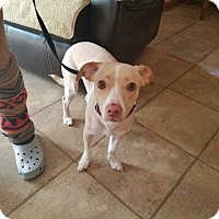 Adopt A Pet :: Duke - Indianapolis, IN
