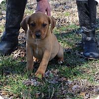 Adopt A Pet :: Tanner - Glastonbury, CT