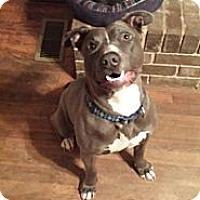 Adopt A Pet :: Sonny - Snellville, GA