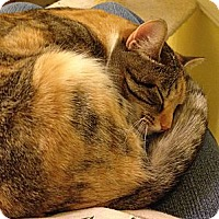 Adopt A Pet :: Felicia - St. Louis, MO
