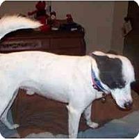 Adopt A Pet :: Rodney in Lufkin TX - Houston, TX