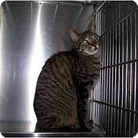 Adopt A Pet :: Galahad - Syracuse, NY