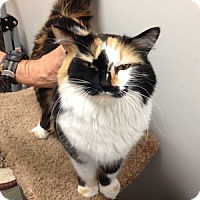 Adopt A Pet :: Bernadette - Gilbert, AZ