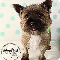 Adopt A Pet :: Jolie - Omaha, NE