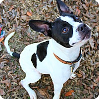 Adopt A Pet :: JAKE GRIFFEY - North Augusta, SC