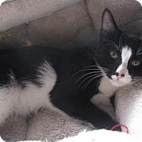 Adopt A Pet :: Honda - Berkeley Hts, NJ