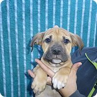 Adopt A Pet :: Montana - Oviedo, FL