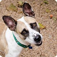 Adopt A Pet :: Faith - Houston, TX
