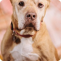 Adopt A Pet :: Simba - Portland, OR
