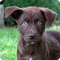 Adopt A Pet :: Fudge - Glastonbury, CT
