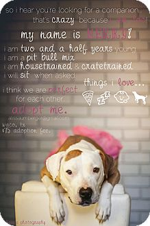 Pit Bull Terrier Mix Dog for adoption in Arlington, Texas - Merry