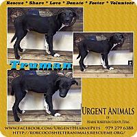 Adopt A Pet :: Truman - Hearne, TX