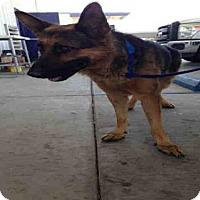 Adopt A Pet :: A1035237 - Bakersfield, CA