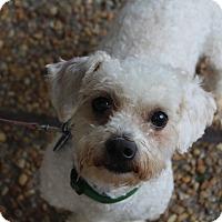 Adopt A Pet :: Roosevelt - Atlanta, GA