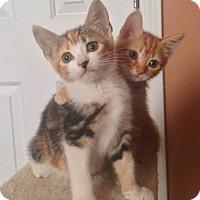 Adopt A Pet :: Isobel - Acworth, GA