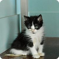 Adopt A Pet :: Strummer - San Antonio, TX