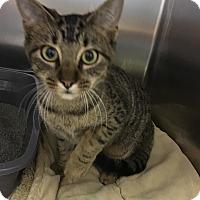 Adopt A Pet :: Anastasia - Richboro, PA
