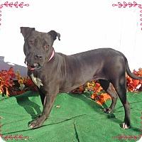 Adopt A Pet :: LEXUS - Marietta, GA