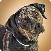 Adopt A Pet :: Ranger - Prescott, AZ