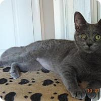 Adopt A Pet :: Clarice - Philadelphia, PA