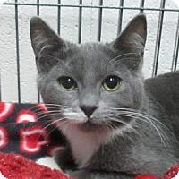 Adopt A Pet :: Grim - Lloydminster, AB