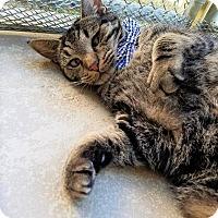 Adopt A Pet :: Bud - Umatilla, FL