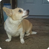 Adopt A Pet :: BamBam/BangBang - Indianapolis, IN
