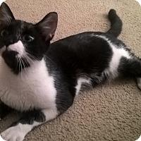 Adopt A Pet :: Zipper (7-month boy) - Witter, AR