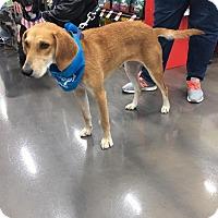 Adopt A Pet :: River - joliet, IL