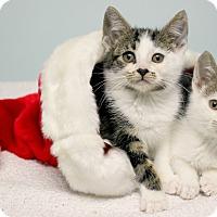 Adopt A Pet :: Petey and Spanky - Montclair, NJ