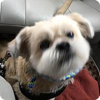 Adopt A Pet :: Soloman - McKinney, TX