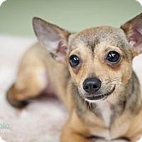 Adopt A Pet :: Cierra - Hilliard, OH