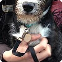 Adopt A Pet :: Baker - Marietta, GA