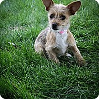 Adopt A Pet :: Rosa - Broomfield, CO