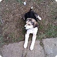 Adopt A Pet :: Buster - Paintsville, KY