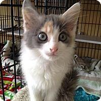 Adopt A Pet :: Darlene - Island Park, NY
