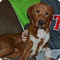 Adopt A Pet :: Heidi - Homewood, AL