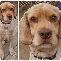 Adopt A Pet :: Spike - San Diego, CA
