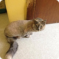 Adopt A Pet :: Thumbelina - Lancaster, MA