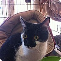 Adopt A Pet :: Dot - Toronto, ON
