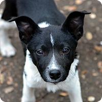Adopt A Pet :: Ren - Garland, TX