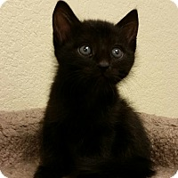 Adopt A Pet :: Morning Glory - Phoenix, AZ