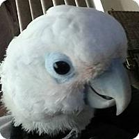 Adopt A Pet :: Millie - Tampa, FL
