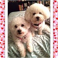 Adopt A Pet :: Adopted!!Emma and Crystal - NY - Tulsa, OK