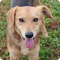 Adopt A Pet :: Spinnaker - Harmony, Glocester, RI