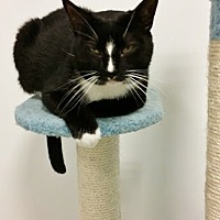 Adopt A Pet :: Snoops - Westbury, NY